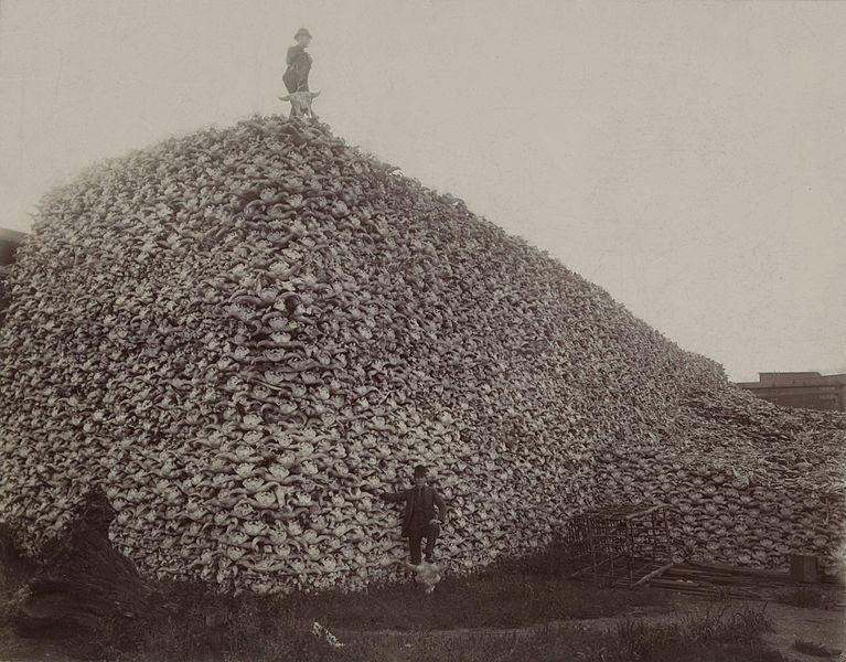 Hunter standing atop a mountain of bison bones. Via wikimediacommons