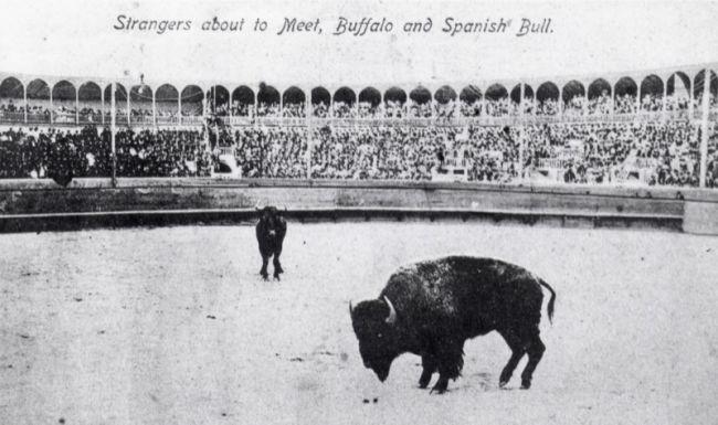 BuffaloBullFightJuarez